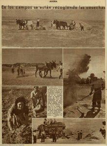 Mulas y algo de maquinaria: la recogida de la cosecha en julio de 1936