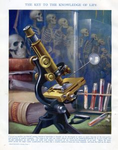 La evolución humana bajo el microscopio